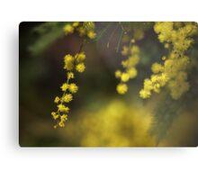 Spring Wattle Metal Print