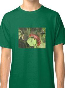 Pipevine Swallowtail Butterfly Caterpillar Classic T-Shirt