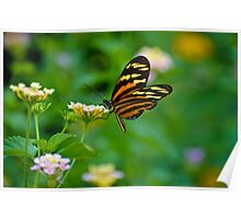 Butterfly - Intuitive Edge of Dreams... Poster