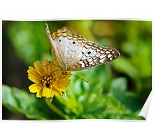 Bringing the Sunshine...a Butterfly Poster