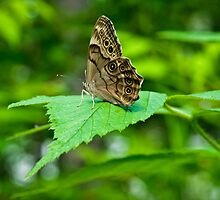The Energy of Life/a Butterfly on a Green Leaf. by Christine Kapler