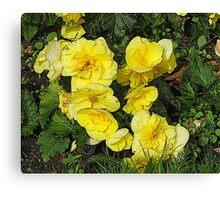 Cascading yellow flowers Canvas Print