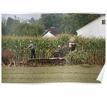Amish Cutting Corn Poster