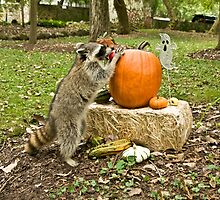 Raccoon With Pumpkin by jkartlife