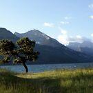 Windswept Tree by PPPhotoArt