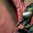 Frilly neck lizard by indiafrank