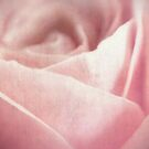 Fleur [Print and iPhone / iPod Case] by Damienne Bingham