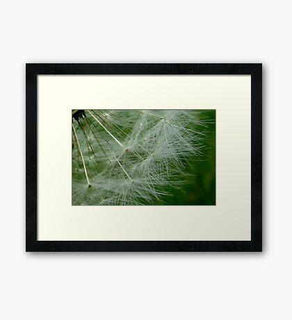 Wispy Wonder Framed Print