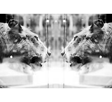 Big Cats | Looking Glass Photographic Print