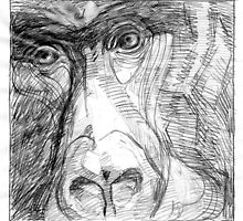 Garilla Face by David  Kennett