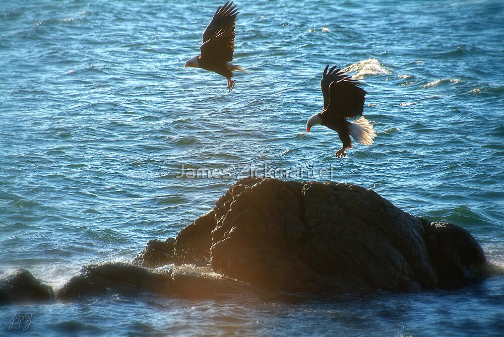 Pair of Eagles #1 by James Zickmantel