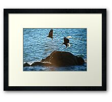 Pair of Eagles #1 Framed Print