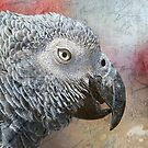 Parrot Portrait Texture by saseoche