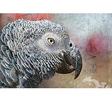 Parrot Portrait Texture Photographic Print