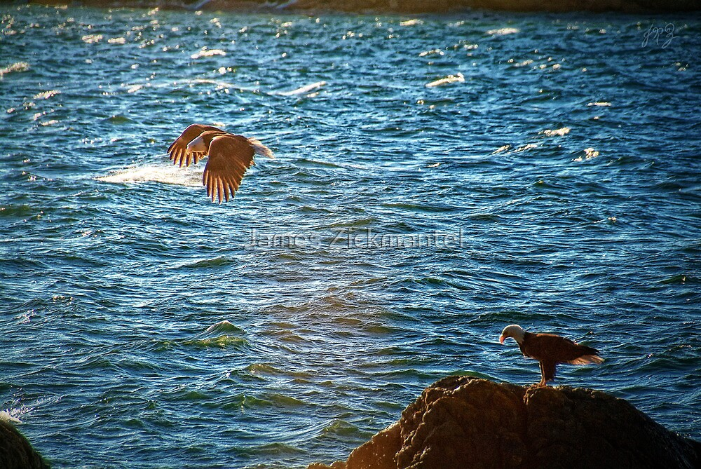 Pair of Eagles #2 by James Zickmantel