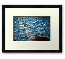 Pair of Eagles #2 Framed Print