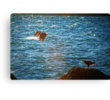 Pair of Eagles #2 Canvas Print