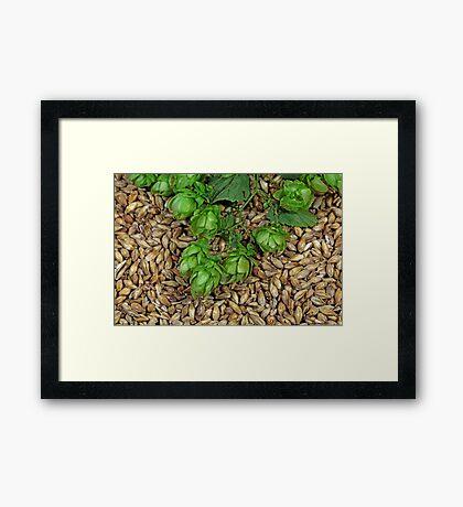Hops and Malt Framed Print