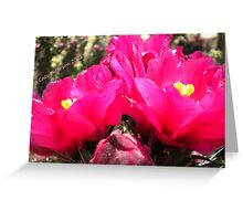 Flower Fish Comes Up For Air - Pink Prickly Pear Cactus Flowers Greeting Card