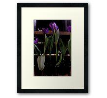 Melbourne Flower Show 2011 Framed Print