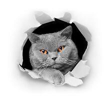 Cat peeking out of a paper hole by Keren Segev