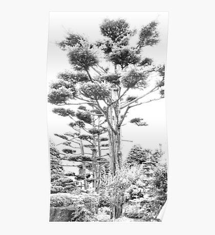 japanese pine Poster