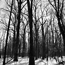 Winter Trees and Sun 2 BW by marybedy