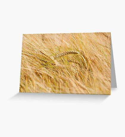 Golden Summers: Bearded Barley Greeting Card