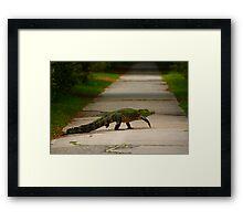 gator crossing Framed Print