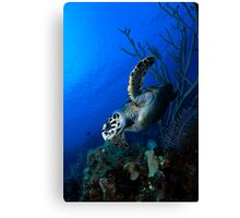 Hawksbill and Reef Canvas Print