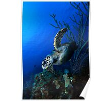 Hawksbill and Reef Poster