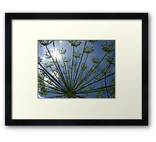 daylight dill too Framed Print