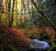Light For The Eyes ~ Calapooya River ~ by Charles & Patricia   Harkins ~ Picture Oregon