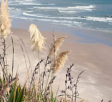 Maunganui Bluff by Jenny Dean