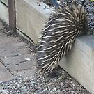 Prickly visitor by LexieMaddock