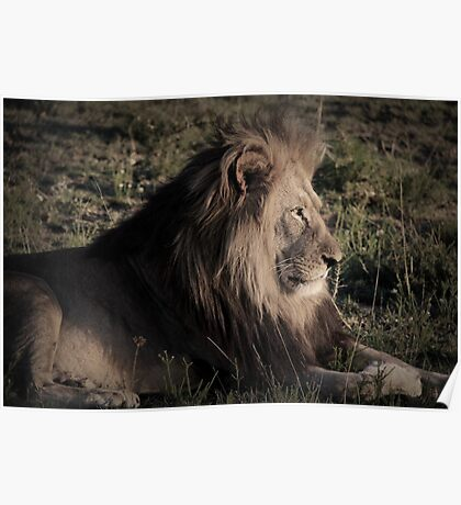 majestic king Poster