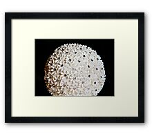 Flower Ball Framed Print
