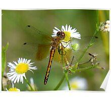 Flower Hugger Poster