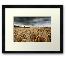 Before the Harvest Framed Print