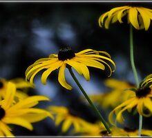 Garden in Bloom by Denise Bulone