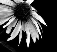 Purple Cone in Black & White by Denise Bulone