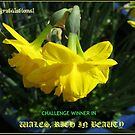 Wales Challenge Winner Banner by kathrynsgallery