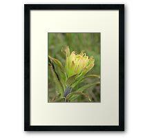 Yellow Brush Framed Print