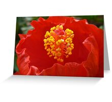 rounding hibiscus Greeting Card