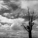 Nature in black and white XII by Anne Staub