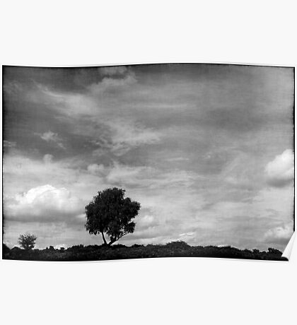 Nature in black and white XIII Poster