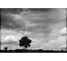 Nature in black and white XIII Photographic Print