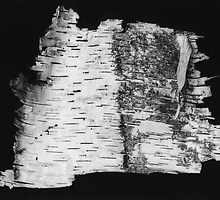 Birch Bark... by Ken Hill