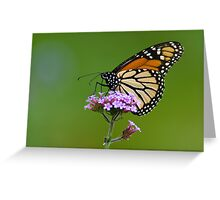 Monarch Butterfly on an August Afternoon Greeting Card