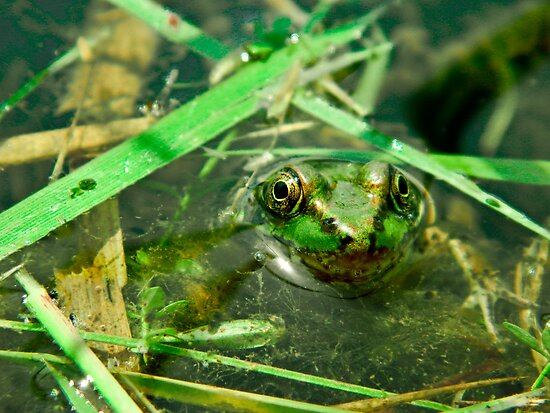lil frogger by a-c-tree